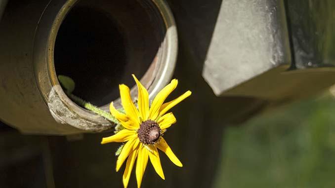 Alter Auspuff mit Blume